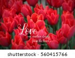 Small photo of Bright Red Tulips with a Bible Verse from 1 Peter