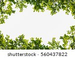 green leaves frame isolated on... | Shutterstock . vector #560437822