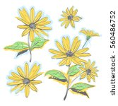 hand drawn chamomiles  daisies. ... | Shutterstock . vector #560486752