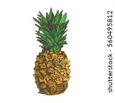 pineapple hand drawn in sketch... | Shutterstock .eps vector #560495812
