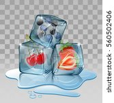 ice cube with berry fruits.... | Shutterstock .eps vector #560502406