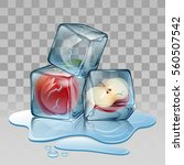 ice cube with apple.... | Shutterstock .eps vector #560507542