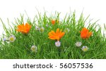Flowers In A Grass  Isolated O...