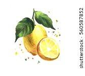 watercolor sketch illustration... | Shutterstock . vector #560587852