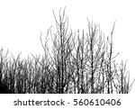 realistic silhouette of bush... | Shutterstock .eps vector #560610406