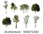 Set of tree, Isolate tree group