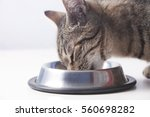 cat eating from the bowl. close ... | Shutterstock . vector #560698282
