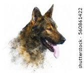 german shepherd dog... | Shutterstock . vector #560861422