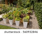 a decorative herb and vegetable ... | Shutterstock . vector #560932846