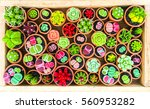 colorful cactus on wooden... | Shutterstock . vector #560953282
