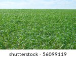 green wheat field and sky - stock photo