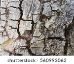 tree bark texture background  ... | Shutterstock . vector #560993062