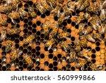 The Queen Bee Swarm   Selectiv...