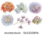 Stock photo set with flowers rose peony alstroemeria marigold watercolor illustration hand drawn 561020896