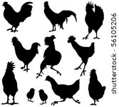 variety of chicken silhouettes. | Shutterstock .eps vector #56105206