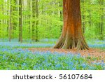 A Tree Amongst Blue Bells