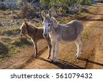 Grey Female Donkey And Brown...