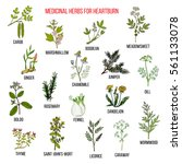 best herbal remedies for... | Shutterstock .eps vector #561133078