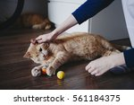 Stock photo hand of persons stroking caress monocular one eyed lying on the floor cat taken homeless from the 561184375