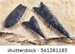 paleo dalton serrated... | Shutterstock . vector #561281185
