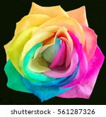 Closeup Rainbow Rose  Multi...