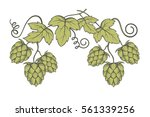 illustration of hops for brewing | Shutterstock .eps vector #561339256