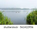 Fog Over Pond Chizhovsky...