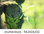 spring awakening  branch with... | Shutterstock . vector #561426232