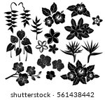 tropical exotic flowers... | Shutterstock .eps vector #561438442