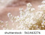 white flowers in soft color and ... | Shutterstock . vector #561463276