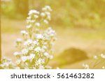 white flowers in soft color and ... | Shutterstock . vector #561463282