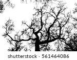 realistic tree silhouette ... | Shutterstock .eps vector #561464086