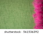 coloured bird feathers on a... | Shutterstock . vector #561536392