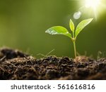 plant with rain water drop and... | Shutterstock . vector #561616816