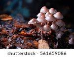 Mushrooms   Wild Mushrooms