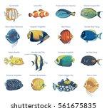 Vector Set Of Tropical Fish....