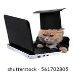 Stock photo red cat sitting on the notebook dollar on the white background 561702805