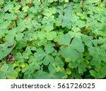 many small plants  green grass | Shutterstock . vector #561726025