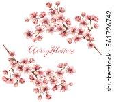 cherry blossoms watercolor...   Shutterstock . vector #561726742