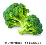 fresh broccoli isolated on... | Shutterstock . vector #561820186