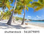 catseye beach on hamilton... | Shutterstock . vector #561879895