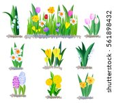spring flowers growing in the... | Shutterstock .eps vector #561898432