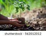 man hand planting young tree on ... | Shutterstock . vector #562012012