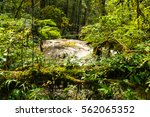 mae pan waterfall in doi... | Shutterstock . vector #562065352
