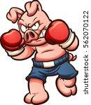 cartoon boxer pig. vector clip... | Shutterstock .eps vector #562070122