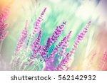 selective focus on beautiful... | Shutterstock . vector #562142932