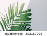 leaf green and white wall. | Shutterstock . vector #562167028