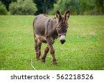 Cute Donkey On A Green Meadow
