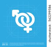 male and female symbols gender... | Shutterstock .eps vector #562299586