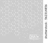 abstract dna background. vector ... | Shutterstock .eps vector #562314856